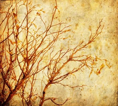 Grunge autumnal tree photo