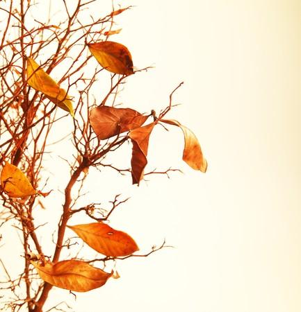 Rama de un árbol otoñal con hojas secas  Foto de archivo