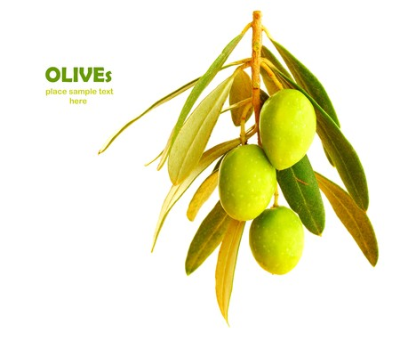 Fresh green olive branch isolated on white background photo
