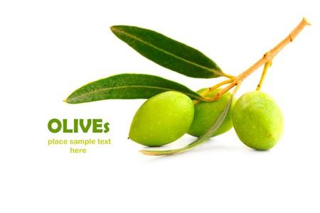 Fresco rama de olivo verde aislado sobre fondo blanco