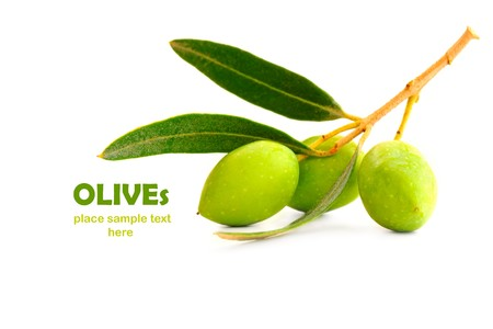 olive branch: Fresh green olive branch isolated on white background