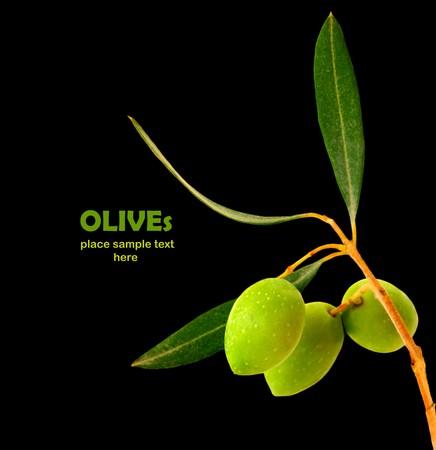 hoja de olivo: Fresco rama de olivo verde aislado sobre fondo negro