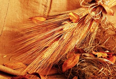Autumn wheat background with autumn leaves Stock Photo - 7753337