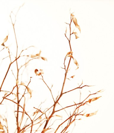 Autumnal tree branch with dry leaves isolated over white