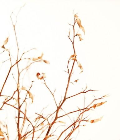 Rama de un árbol otoñal con hojas secas aislados sobre blanco