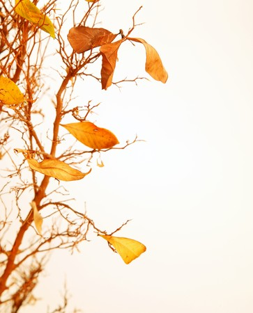 nov: Autumnal tree branch with dry leaves Stock Photo