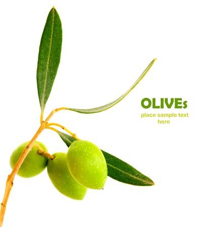 rama de olivo: Fresco rama de olivo verde aislado sobre fondo blanco