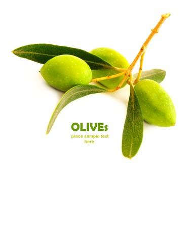 olive leaf: Fresco rama de olivo verde aislado sobre fondo blanco