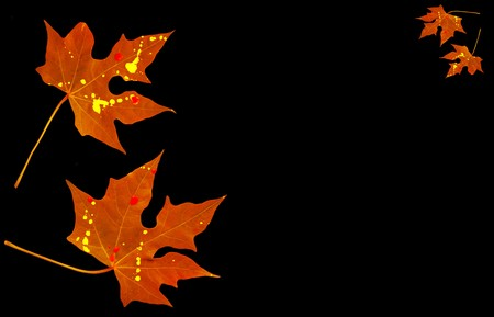 Autumnal red leaves border isolated on black with copy space Stock Photo - 7841998