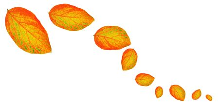 Autumn dry yellow leaves isolated on white Stock Photo - 7842113