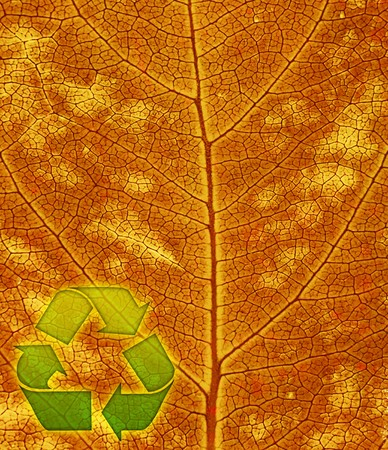 Recycle symbol on the leaf background photo