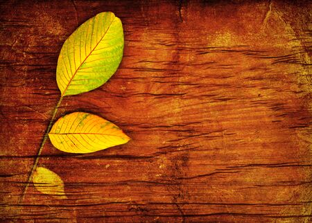 dried orange: Autumn leaves over wood background