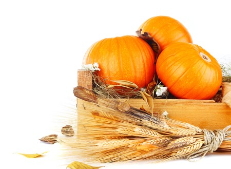 Pumpkins still life with wheat & dry leaves isolated on white photo