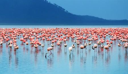 Safari africano, flamencos en el lago Nakuru, Kenia