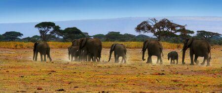 safari game drive: Safari in Africa, la famiglia di elefanti selvatici e panoramica paesaggio del parco nazionale di Amboseli, Kenya