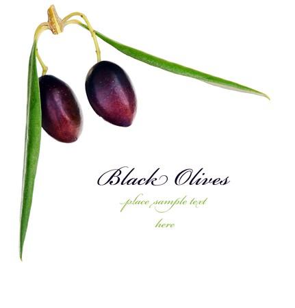 Black olive branch border isolated on white background photo