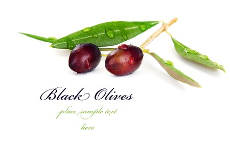 olive branch: Black olive branch isolated on white background Stock Photo