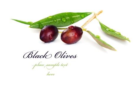 rama de olivo: Rama de olivo negro aislado sobre fondo blanco  Foto de archivo