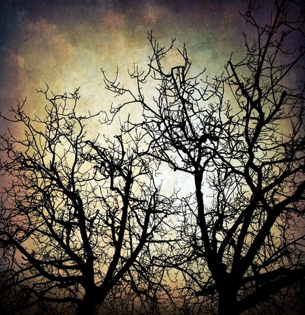 burnt wood: Grungy trees silhouette background over dirty night sky Stock Photo