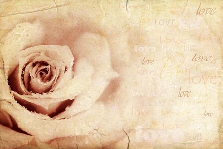 Grungy rose Background, festive Holiday Card mit Liebe text Standard-Bild