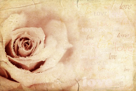 grungy isolated: Grungy rose background, holiday festive card with love text Stock Photo