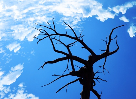 Dry desert tree over blue sky Stock Photo - 8668597