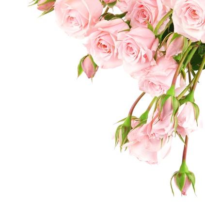 Fresh pink roses border isolated on white background Stock Photo - 8749958