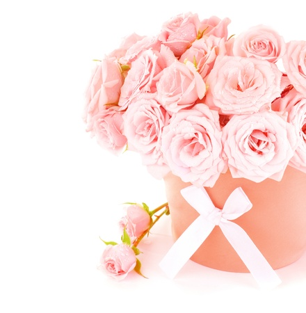 Pot of pink fresh roses, beautiful flowers isolated on white background photo