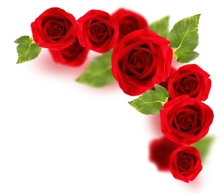 Fresh red roses border isolated on white background