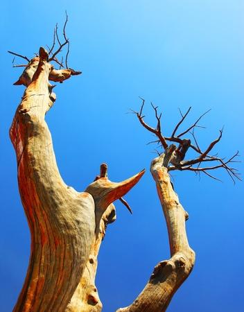 Dry desert tree over blue sky Stock Photo - 8876731
