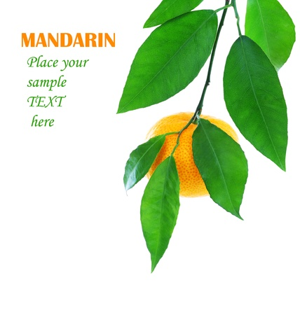 Ripe fresh mandarin with leaves isolated on white background Stock Photo - 8876723