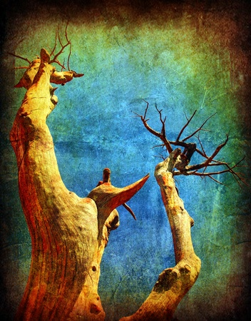 Dry desert grunge tree over blue sky, with old dirty texture effect photo