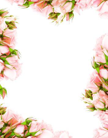 Fresh pink roses frame border isolated on white background Stock Photo - 8888836