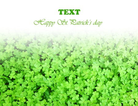 irish culture: Green clover holiday border, st.Patricks day decoration isolated on white background with text space