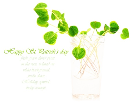 Green fresh clover in the vase, st.Patrick's holiday day decoration isolated on white background with text space Stock Photo - 8980316