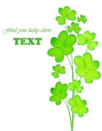 Green clover holiday border, st.Patrick's day decoration isolated on white background with text space Stock Photo - 8980320