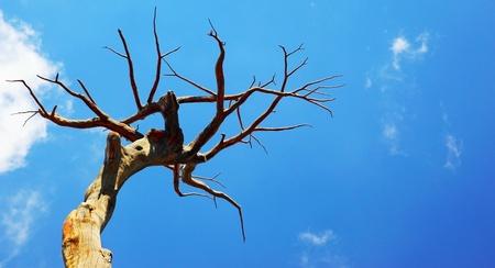 Dry desert tree over blue sky Stock Photo - 8980324