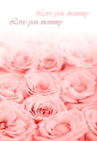 Fresh pink roses border isolated on white background, holiday greeting card photo
