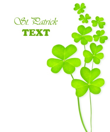 irish symbols: Green clover holiday border, st.Patricks day decoration isolated on white background with text space