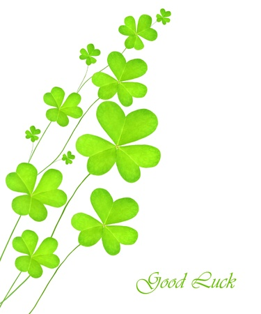 Green clover holiday border, st.Patrick's day decoration isolated on white background with text space Stock Photo - 8980603