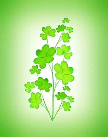Green clover holiday plant, st.Patricks day decoration isolated on green background with text space photo