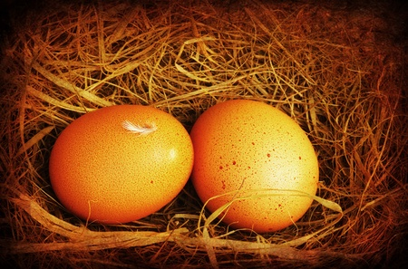 Two golden eggs with tiny feather isolated over dry grass, grungy style photo