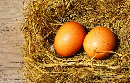 Two golden eggs with tiny feather isolated over dry grass photo