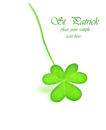 Green fresh clover, st.Patrick's day decoration isolated on white background with text space Stock Photo - 9001847
