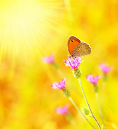 macro image: Beautiful yellow butterfly extreme closeup macro, nature life in spring