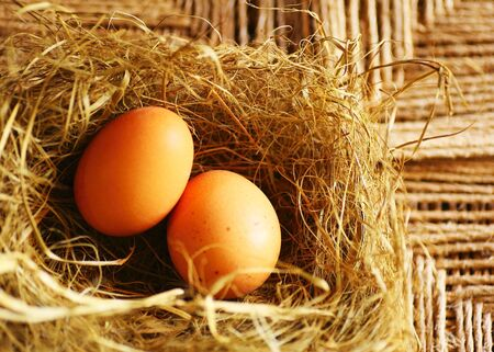 Two golden eggs with tiny feather isolated over dry grass, Easter decoration