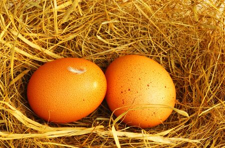 Two golden eggs with tiny feather isolated over dry grass, Easter decoration photo