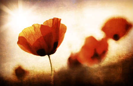 Red poppy flowers meadow, grungy style photo Stock Photo - 9059335