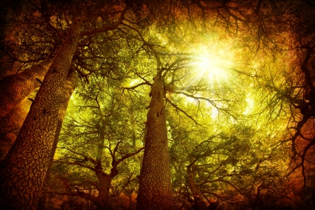 cedars: Cedar tree forest, rare Lebanese kind, grungy style photo Stock Photo