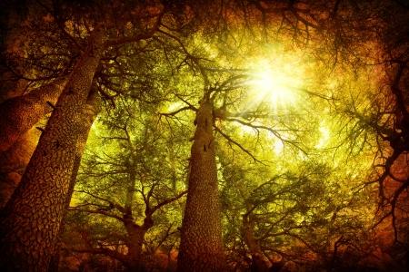 Cedar tree forest, rare Lebanese kind, grungy style photo Stock Photo - 9059356